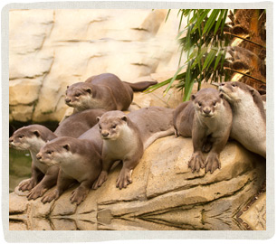 Otter-Group